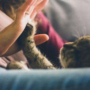Katzenliegen