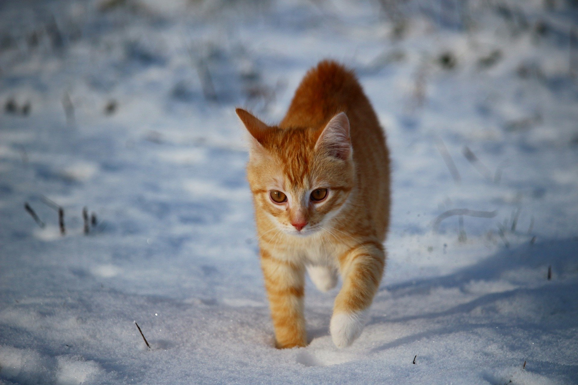 Katzenkrankheiten im Winter