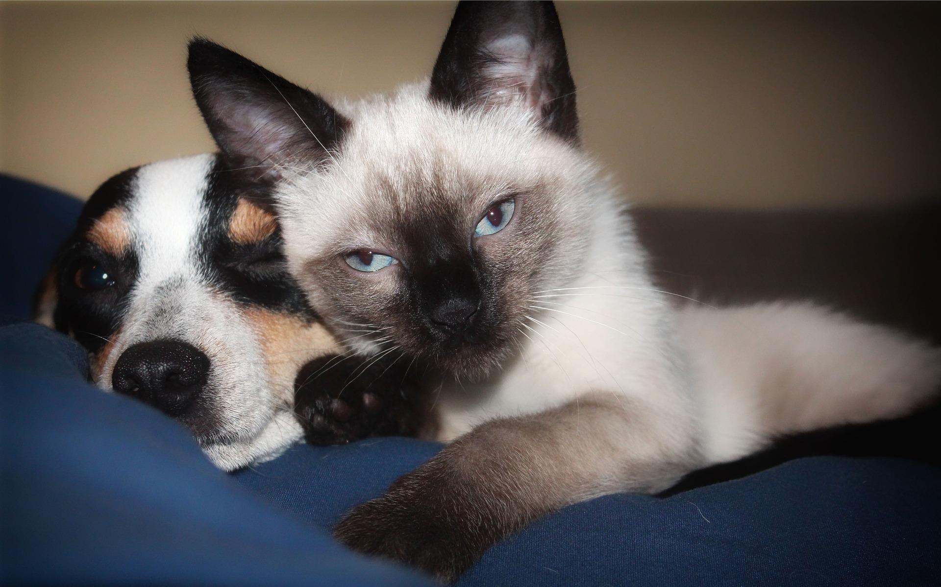 Katzen und Hunde aneinander gewöhnen
