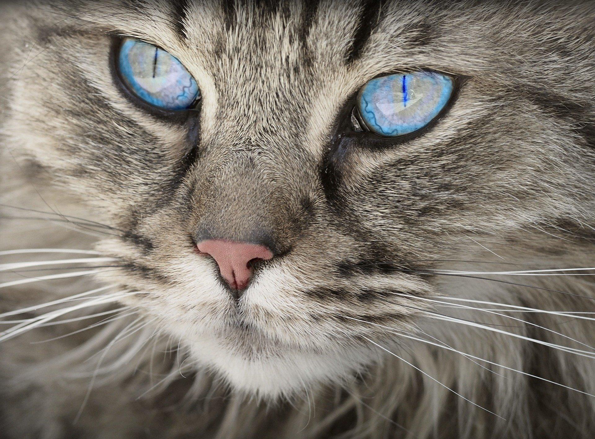 Charakterliche Unterschiede bei verschiedenen Katzenarten
